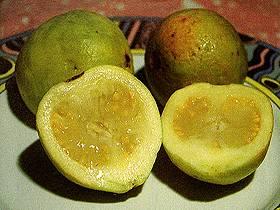تعرف الفواكه الاندونيسيه guave01.jpg